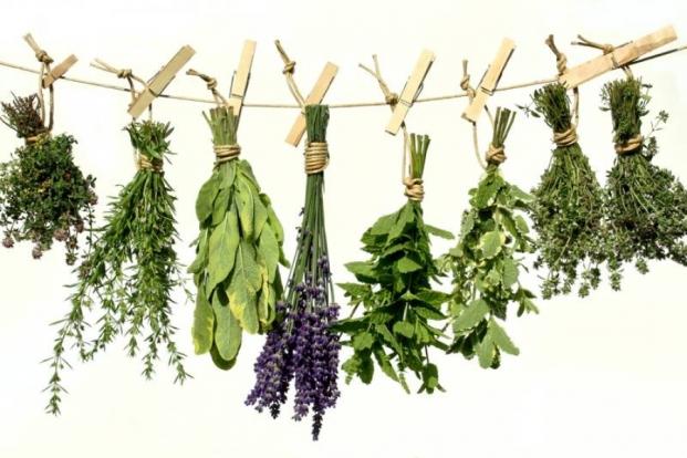 1-ljekovito-bilje