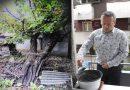 Кавказский орех как памятник освободителям Белграда