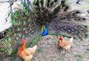 Как украсить двор хвостами и крыльями
