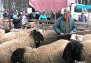 «Овчарски дани» в Сакулах