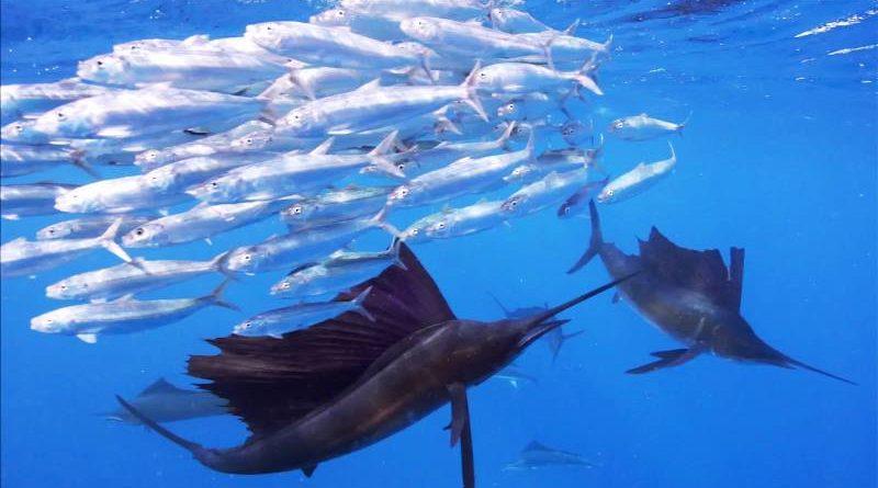 Тайны океана в Панчево