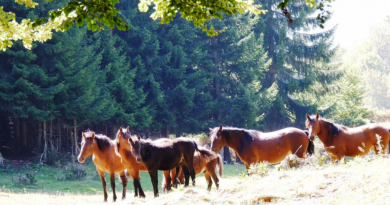 Дикие кони Сувой планины
