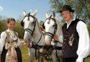 Сербские «хорваты» Воеводины