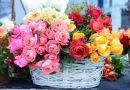 Имя сербской розы