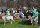Пастушьи дни в Сакулах