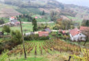 Вино Тито
